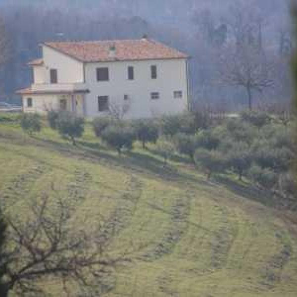la collina degli ulivi