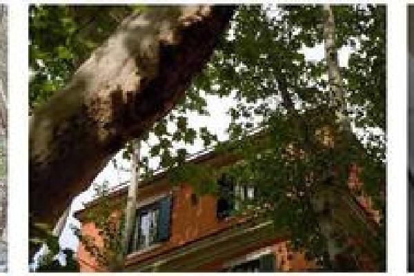 La Casa sugli Alberi