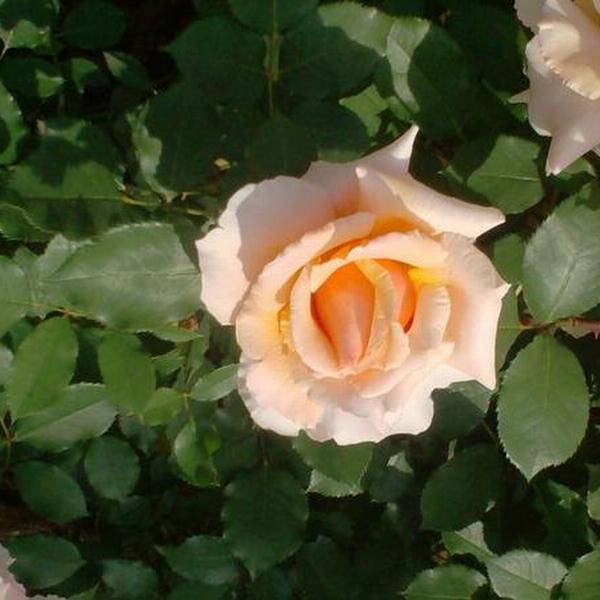 b&b la corte delle rose