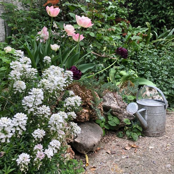 la casa dei fiori di cecilia