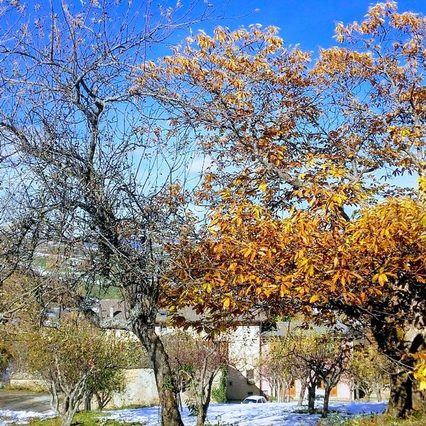 fattoria guedrara