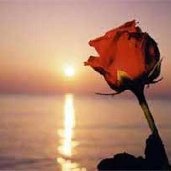 rosa di mare
