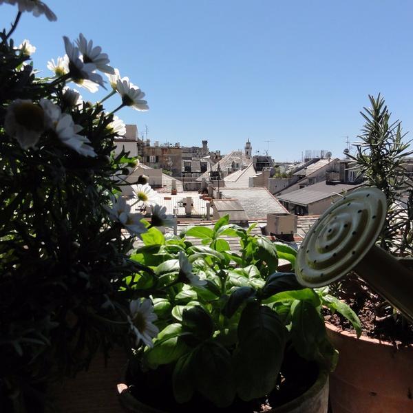il nido sui tetti di genova