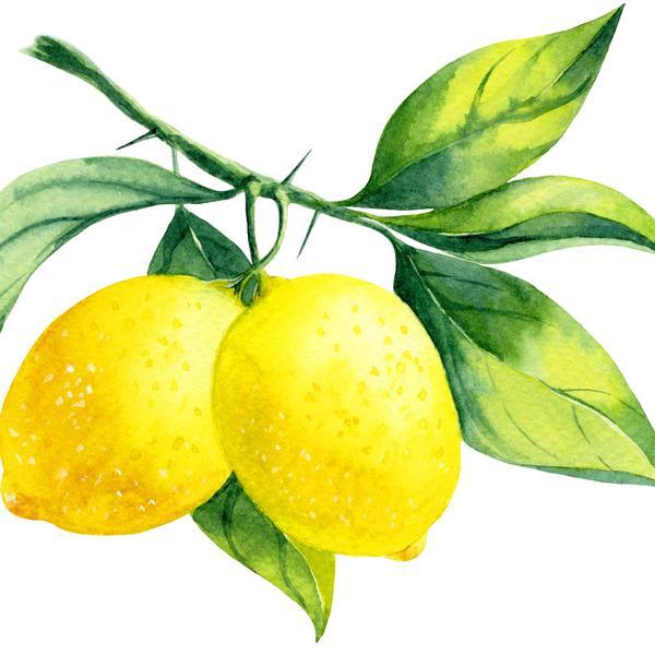 il giardino dei limoni room & breakfast