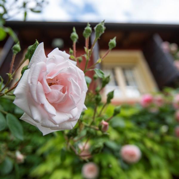 ca' delle rose bio b&b