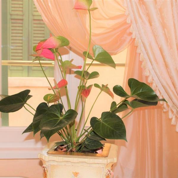 fiore d'arancio