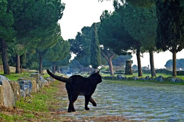 Appia Felis