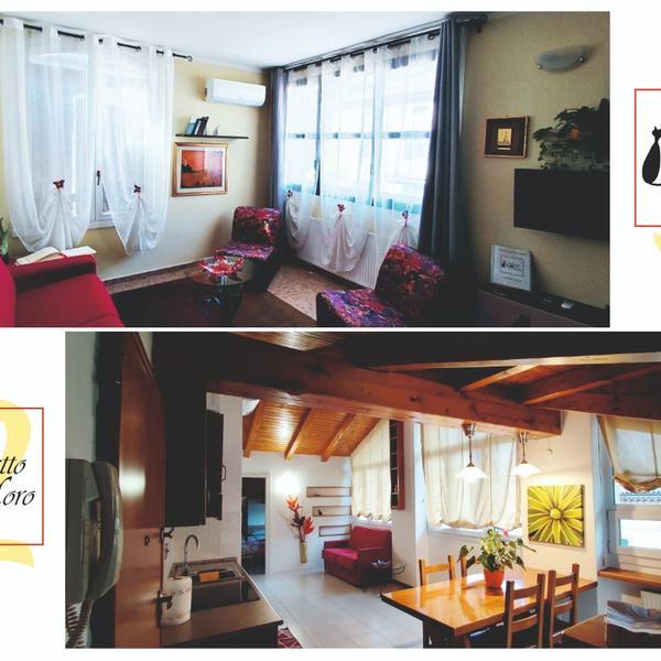gattomoro