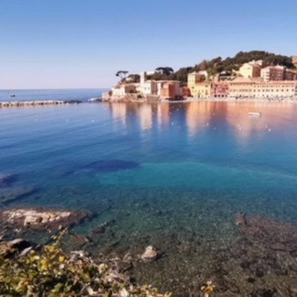 davidhouse