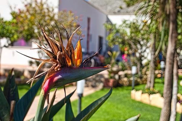 Il Giardino della Nonna