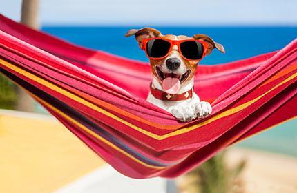 Come far diventare il tuo B&B un alloggio pet-friendly