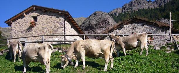Agriturismo e B&B: il caso del Lazio