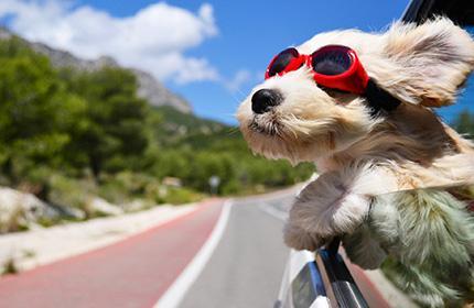 Vacanze con Animali in B&B